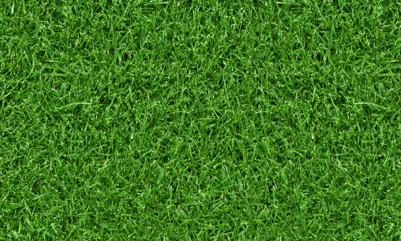 gräsbakgrund